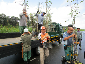 Saplings arrival from a nursery in Jalan Labi transported to Jalan Badas by Forestry Department, Ministry of Primary Resources and Tourism (MPRT). (Photo by: Hazimah Din)