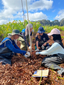 UBD volunteers participation as citizen scientists to assist SMART-UBD researchers during the Badas Tree Planting 2021 planting day. (Photo by: Wardah Tuah)